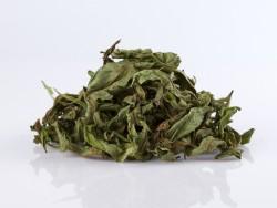 Gauromecio-arbata-Zolynu-namai