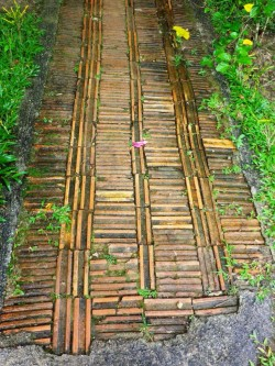takelis-tailando-dziungliu-kaimelyje