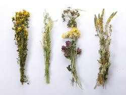 Dovanu-pakavimas-dziovinti-augalai-puokstes-Zolynu-namai