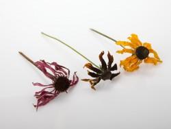 augalu-smeigtukai-dovanu-puosybai-dekoravimui-puokstems-sukuosenoms-zolynu-namai