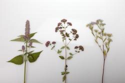 dovanu-puosyba-uzkistukai-is-dziovintu-augalu-zolynu-namai