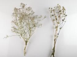 dziovinti-augalai-dekoravimui-puokstems-zolynu-namai-zunga-guboja