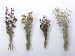 dziovinti-augalai-geles-puokstems-dekoravimui-zolynu-namai