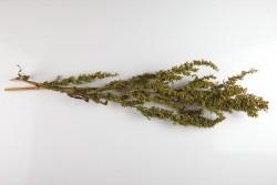 dziovinti-augalai-puokstems-dekoravimui-zolynu-namai