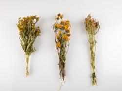 dziovinti-ziedai-dekoravimui-puokstems-zolynu-namai-1
