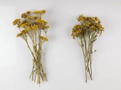 dziovinti-ziedai-dekoravimui-puokstems-zolynu-namai-2