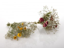 dziovintos-gubojos puoksteles-stalui-dovanoms-puosybai-Small-dried-flowers-bouquet-for-gift-decorating