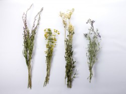 lauku-augalai-dziovinimas- puokstes-dekoravimas