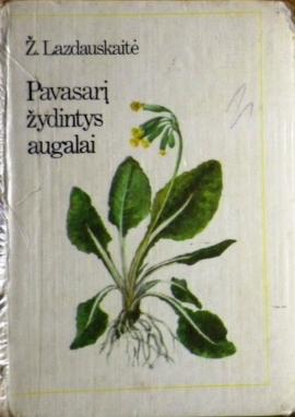 pavasari-zydintys-augalai