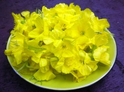 Nakvisos-ziedai