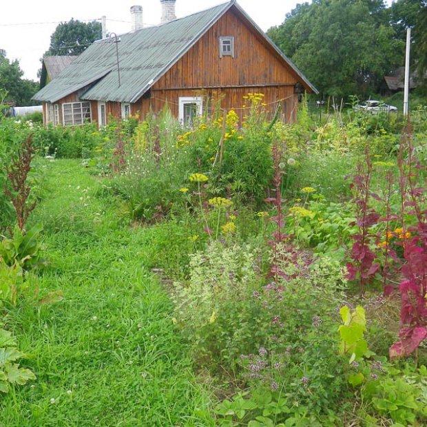 Praktiškai naudojamų augalų kolekcija